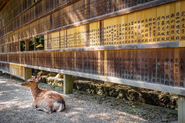 Deer in front of Wooden tablets, Nara, Japan